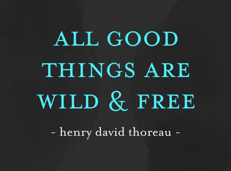 Tshirt All good things are wild free Henry David Thoreau.